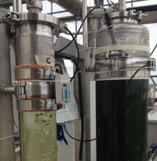 Par alghe monitoraggio piante